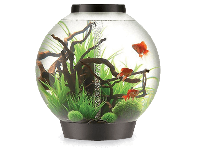 Biorb Aquariums