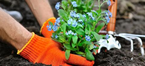 Rescuing Age Concern Flower Beds